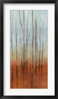 Birch Forest I Framed Print
