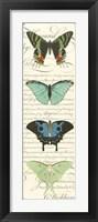 Butterfly Prose Panel II Framed Print
