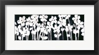 Framed White Flowers on Black II