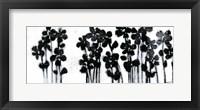 Framed Black Flowers on White I