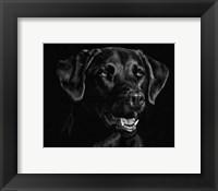 Framed Canine Scratchboard XVII
