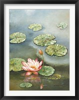 Framed Water Lily With Pink Blossom