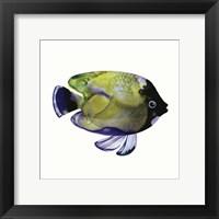 Framed Green Fish