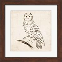 Framed Owl I