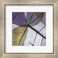 Framed Purple and Grey Leaves II