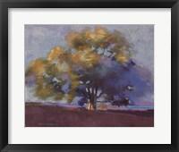 Framed Twilight Oak III