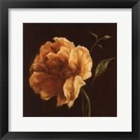 Framed Floral Symposium II
