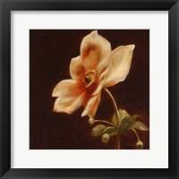 Framed Floral Symposium IV