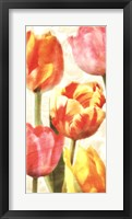 Framed Glowing Tulips II