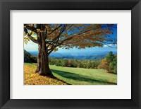 Framed Blue Ridge Beauty