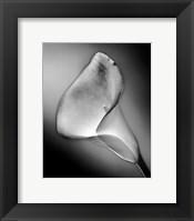CALLA NO.3, FRONT-SILVER SERIE Framed Print