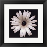 Framed Sunscape Daisy
