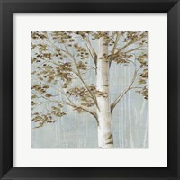 Framed Birch Study I