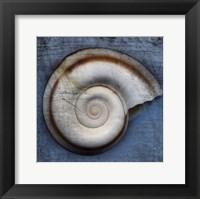 Framed Snail