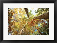 Framed Forest Canopy
