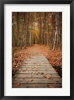 Framed Woodland Path