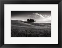 Framed Cypress Cluster
