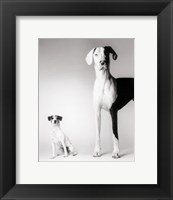 Framed Domino and Daisy