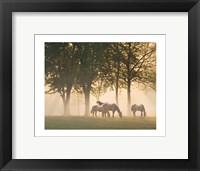 Framed Horses in the mist