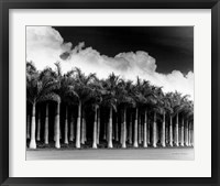 Framed White Palms, Costa Rica