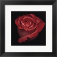 Romance Framed Print