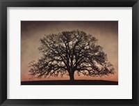 Framed Majestic Oak
