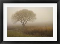 Framed Tree in Field
