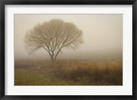 Framed Tree in Field