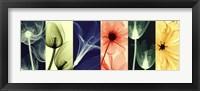 Framed Flora