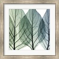 Framed Celosia Leaves II