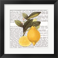 Citrus Edition I Framed Print