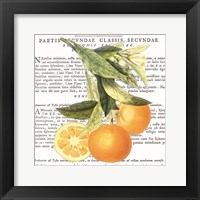 Citrus Edition II Framed Print