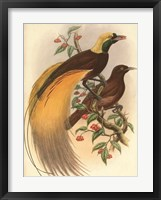 Golden Bird of Paradise Framed Print