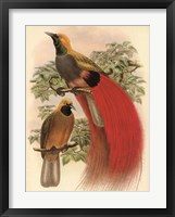 Framed Scarlet Bird of Paradise