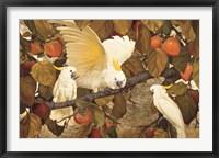 Framed Persimmons & Cockatoos
