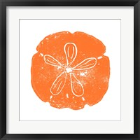 Framed Orange Sand Dollar