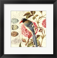 Framed Bird Study 1