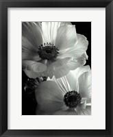 Anemone II Framed Print
