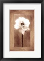 Framed Antique Rose
