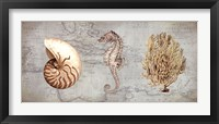 Framed Sea Treasures I