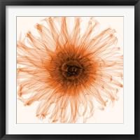Framed Dahlia (Orange)