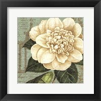 Framed Camellia Study I