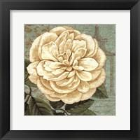 Framed Camellia Study II