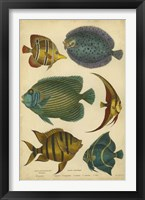 Framed Non-Emb. Goldsmith's Spinous Fishes