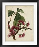Framed Non-Embellished Antique Fringe Tree