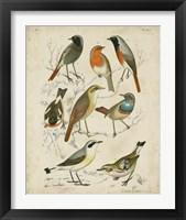 Framed Non-Embellished Avian Gathering I