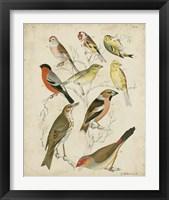 Framed Non-Embellished Avian Gathering II
