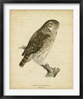 Framed Non-Embellished Vintage Owl
