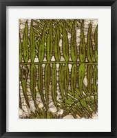 Framed Batik Frond III