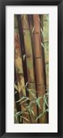 Framed Bamboo Finale I